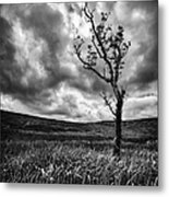 Lone Tree On The Ayrshire Moors Metal Print by John Farnan