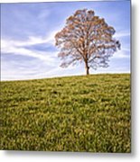 Lone Tree On The Hill Colour Metal Print by John Farnan