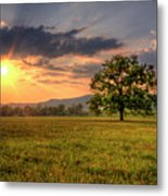 Lonely Tree In Field Metal Print by Malcolm MacGregor