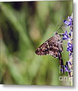 Long-tailed Skipper Butterfly Metal Print by Cindy Bryant