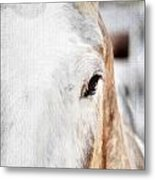 Looking Into Her Soul Metal Print by Darren Fisher
