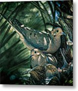 Love A Dove Dove Metal Print by Chris Lord