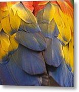Macaw Parrot Plumes Metal Print by Adam Romanowicz