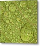 Macro Image Of A Magnolia Leaf Metal Print by Laszlo Podor Photography