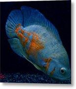 Magic Fish Name Oscar  Metal Print by Colette V Hera  Guggenheim