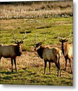 Magnificent Bull Elk Psalm 50 Metal Print by Cindy Wright