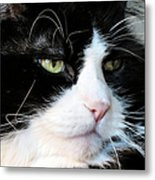 Maine Coon Face Metal Print by Michelle Milano