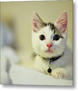 Male Kitten Sitting On Bed Metal Print by Nazra Zahri