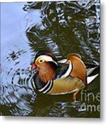 Mandarin Duck 04 Metal Print by Arik Baltinester