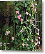 Mandevilla Vine With Pink Flowers Metal Print by Darlyne A. Murawski