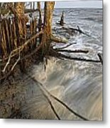 Mangrove Trees Protect The Coast Metal Print by Tim Laman