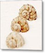Marine Snails Metal Print by Joana Kruse