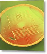 Mems Production, Gold Metal Circuitry Metal Print by Colin Cuthbert