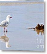 Mirrored Seagull Metal Print by Kaye Menner