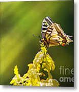Monarch Butterfly Metal Print by Carlos Caetano