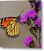 Monarch Metal Print by Mircea Costina Photography