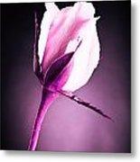 Monochrome Pink Rose Metal Print by M K  Miller