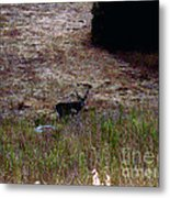 Moonlit Buck Metal Print by The Kepharts