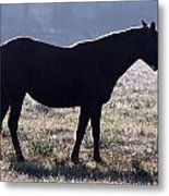 Morning Equine Metal Print by Mark J Seefeldt