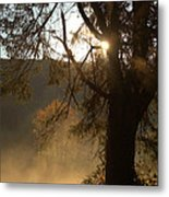 Morning Has Broken Metal Print by Karol Livote