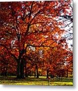 Morton Arboretum In Colorful Fall Metal Print by Paul Ge