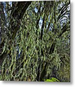 Moss Covered Trees Metal Print by Garry Gay