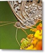 Moth On Flower Clusters Metal Print by Lisa  Spencer