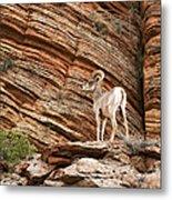 Mountain Goat Metal Print by Jane Rix