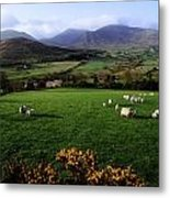 Mourne Mountains From Trassey Road, Co Metal Print by The Irish Image Collection