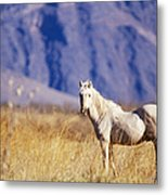 Mustang Metal Print by Mark Newman and Photo Researchers