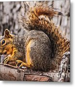 My Nut Metal Print by Robert Bales