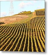 Napa Valley Vineyard . 7d9065 Metal Print by Wingsdomain Art and Photography