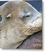 Napping Metal Print by Gwyn Newcombe