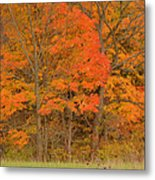 Northeast Fall Colors Metal Print by Stephen  Vecchiotti
