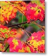October Maple Metal Print by Mandi Howard