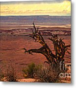 Old One Metal Print by Robert Bales