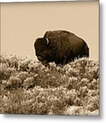 Old Timer Metal Print by Shane Bechler