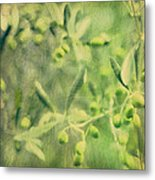 Olive And Leaf Metal Print by Linde Townsend