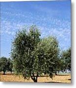 Olive Tree In Provence Metal Print by Bernard Jaubert