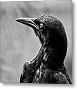 On Alert - Bw Metal Print by Christopher Holmes
