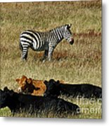 One Is Not Like The Others Metal Print by Methune Hively