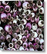 Onion Power Metal Print by Susan Herber