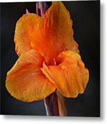 Orange Canna Lily Metal Print by Melanie Moraga