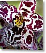 Orchid Flower Metal Print by C Ribet