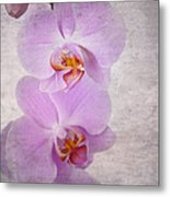Orchid Metal Print by Jane Rix