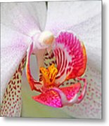 Orchids 10 Metal Print by Becky Lodes