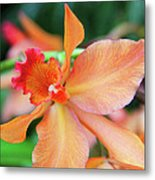 Orchids 25 Metal Print by Becky Lodes