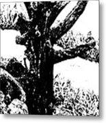 Ornamental Dead Tree By The Path Metal Print by Kantilal Patel