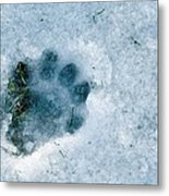 Otter Footprint In Snow Metal Print by Duncan Shaw