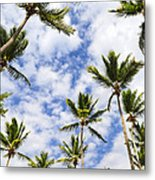Palm Trees Metal Print by Elena Elisseeva